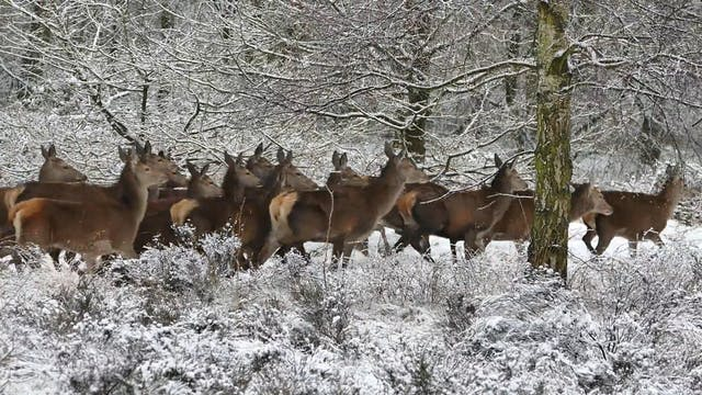 A Group Of Deer At Winter