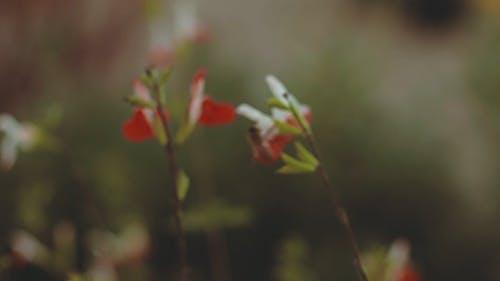 蜜蜂在一朵花