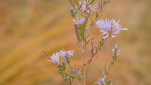 Schöne Blumen Mit Weißen Blütenblättern
