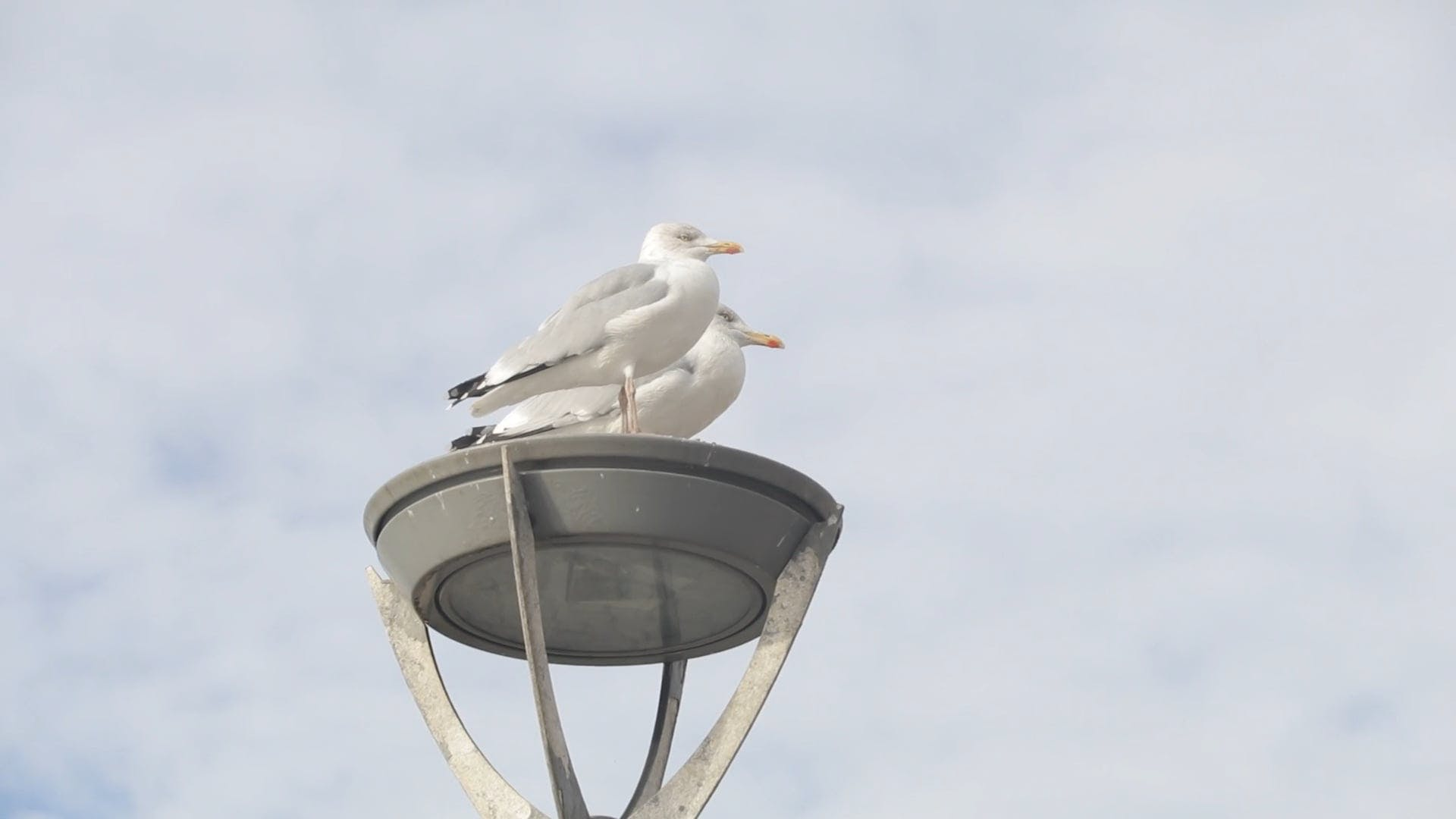 Two Seagulls Perched On A Metal Structure