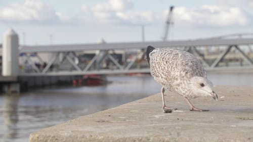 Close-Up Video Of White Seagull