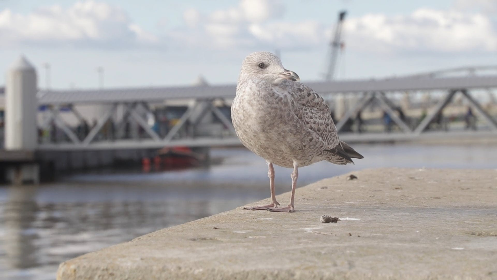 Seagull Perched On A Concrete