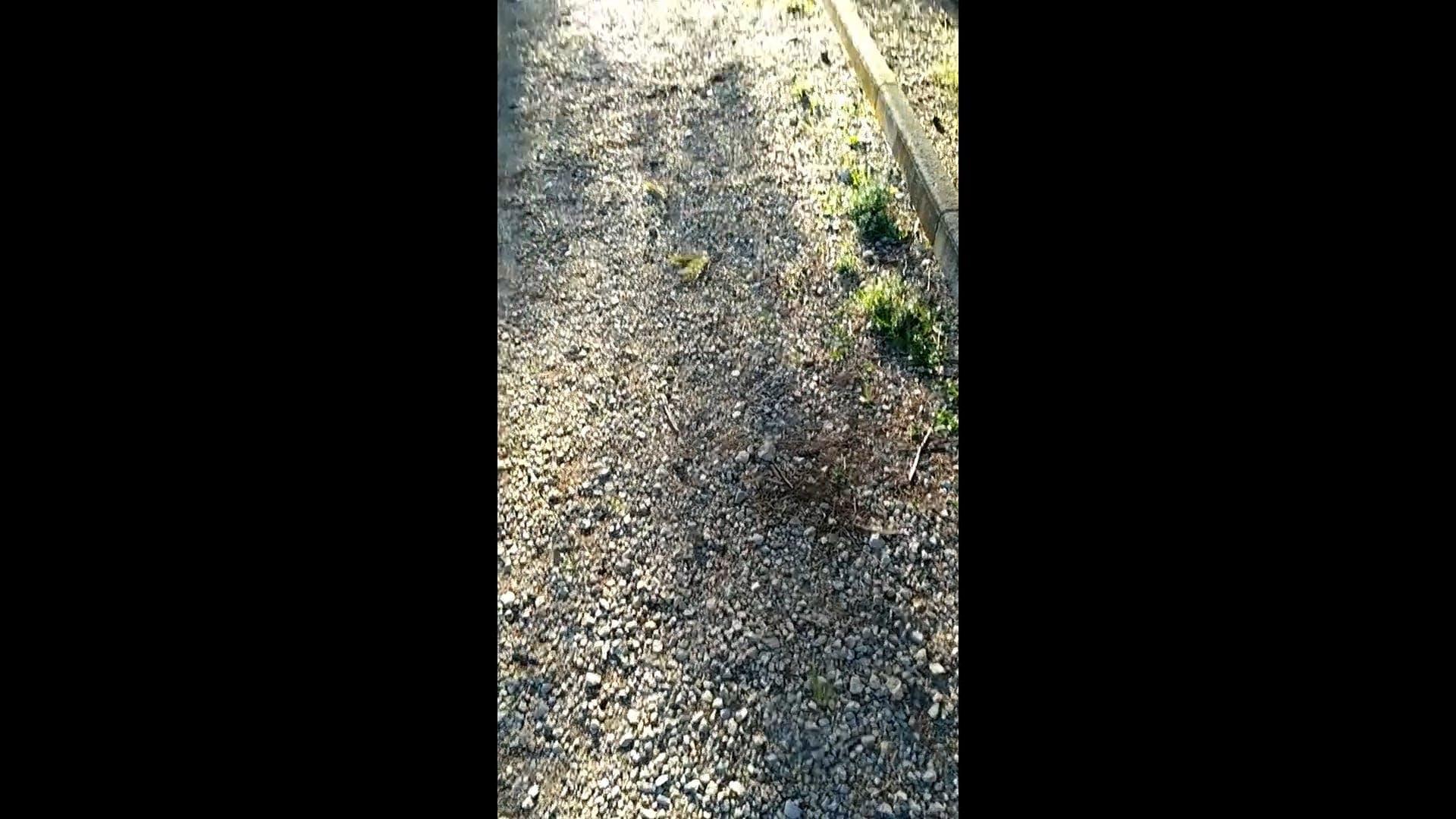 Unpaved Pathway