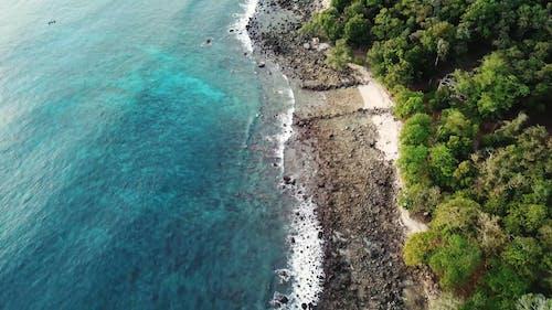 Photos gratuites de aérien, arbres, bois, bord de mer