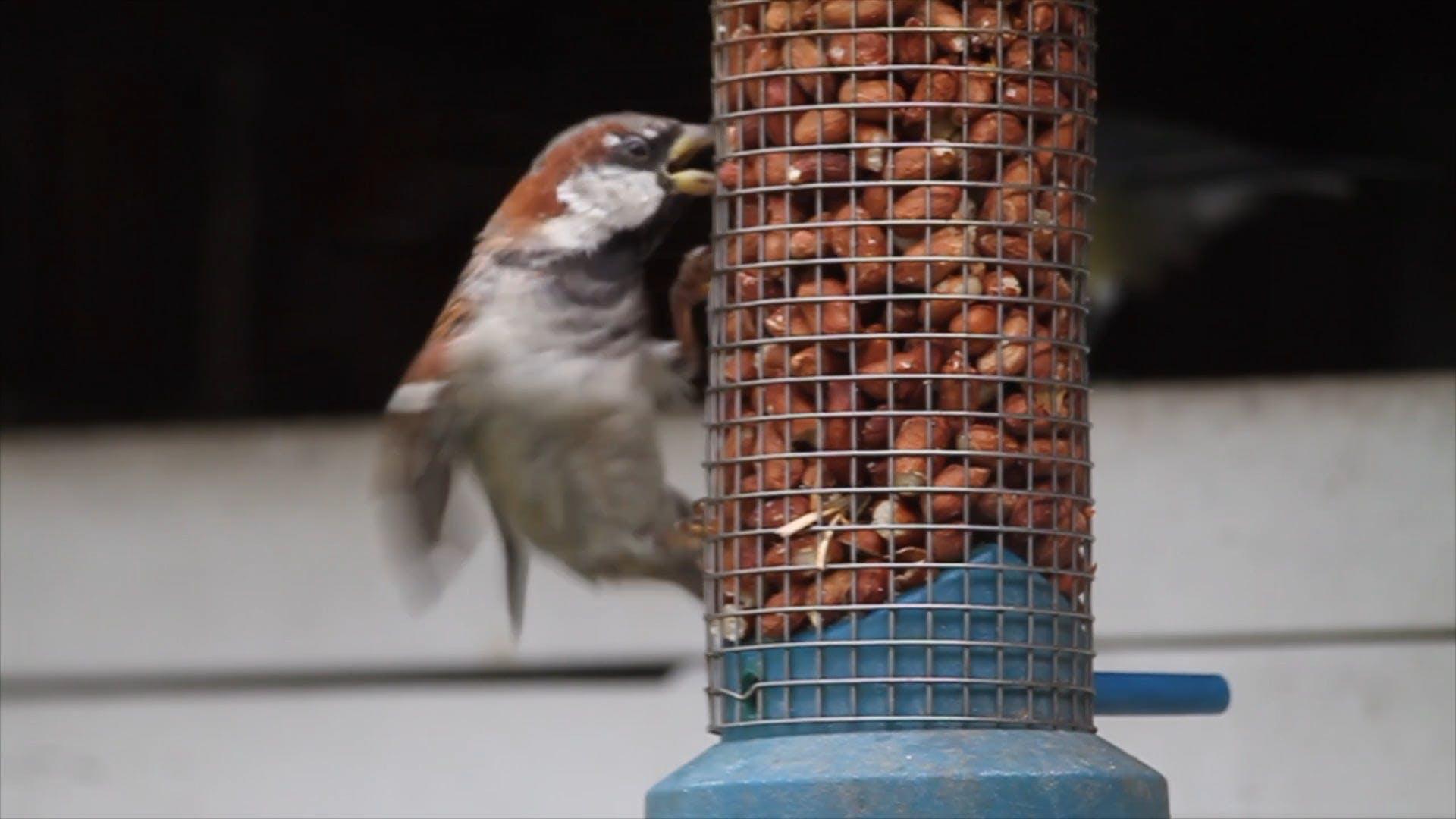 Perched Bird On A Feeder
