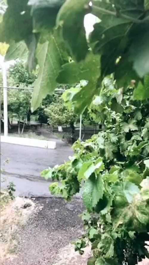 A Garden On A Rainy Day