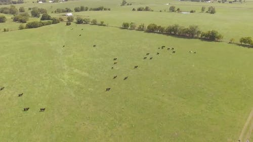 Aerial View Of Animals Running In The Field