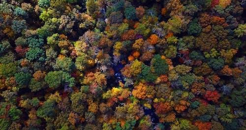 秋の色のドローンビュー