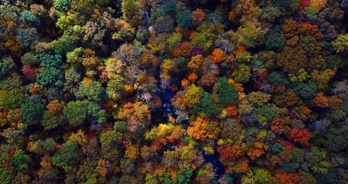 Drone View Of Autumn Colors