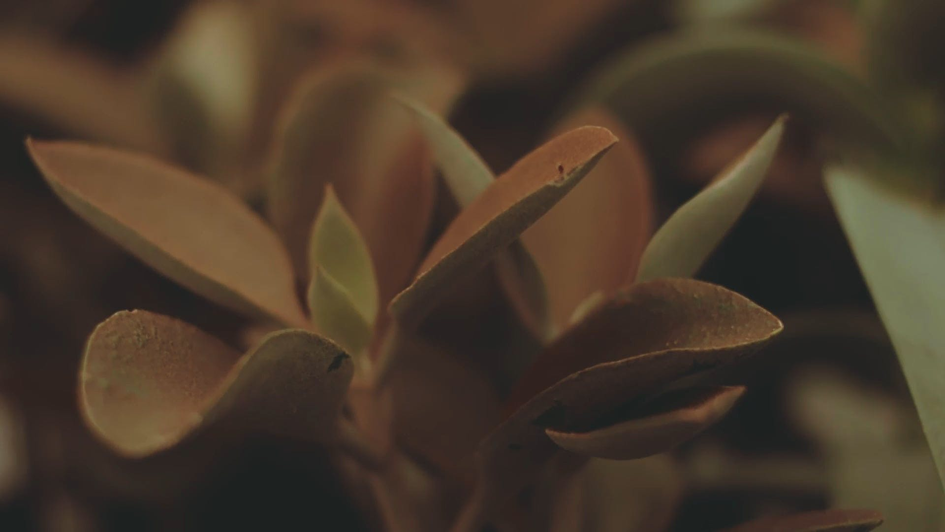 A Succulent Plant At Close View