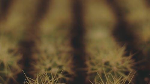 Blur Image Of A Succulent Plant