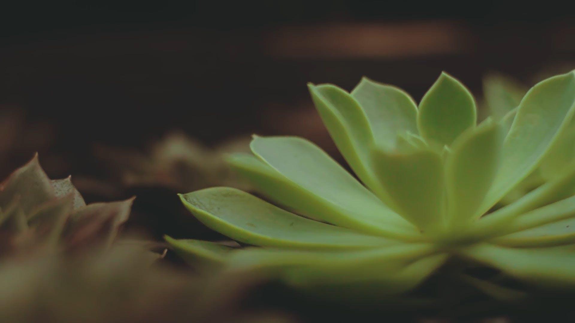 Close View Of Succulent Plants