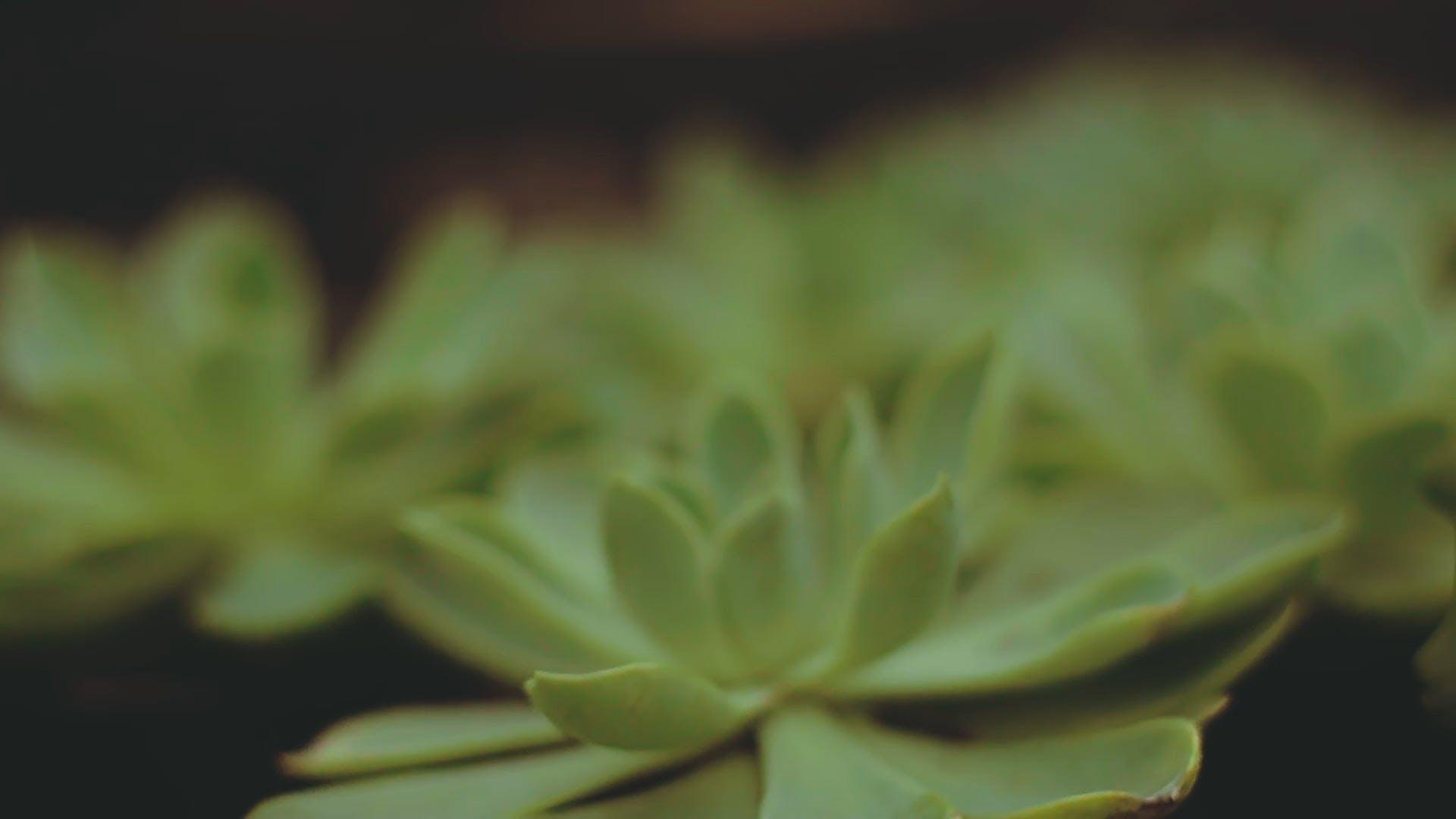 Beautiful Succulent Plants