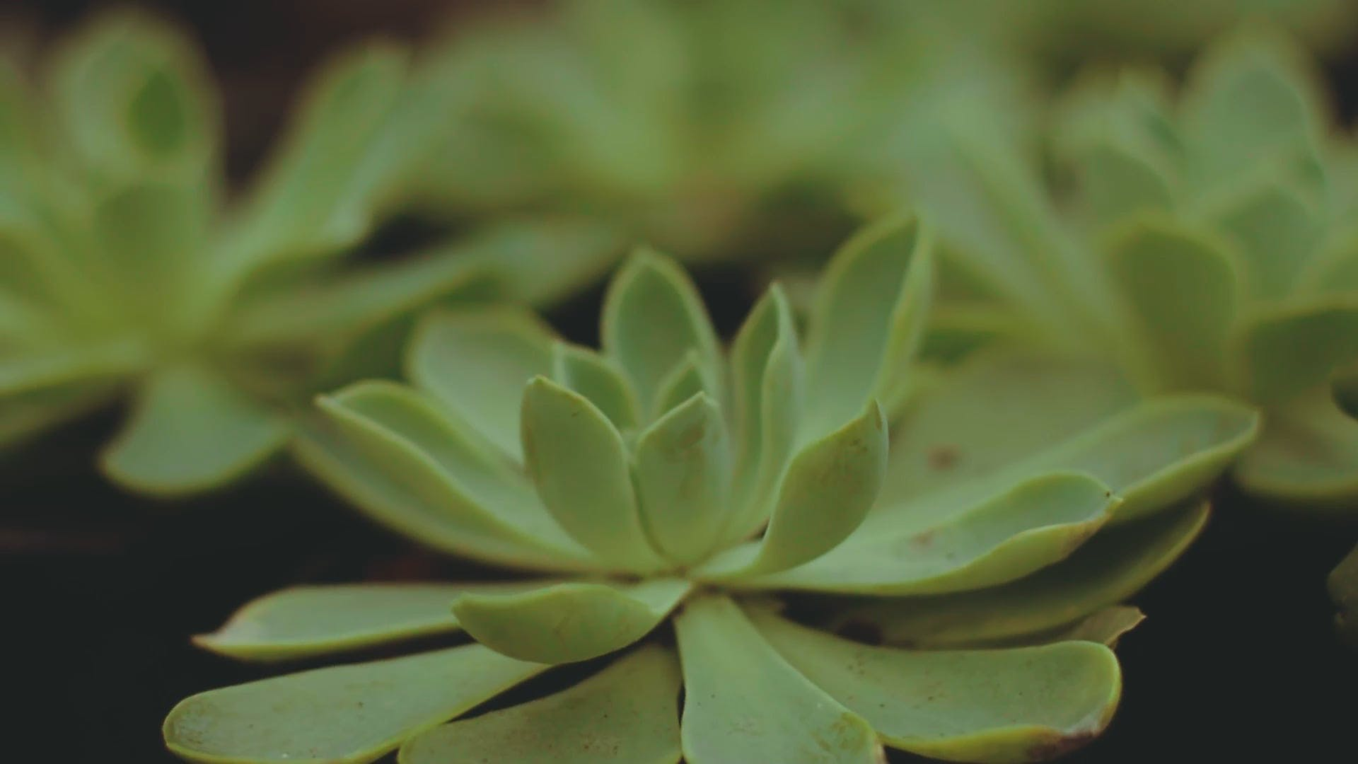 Succulent Plants In Close View