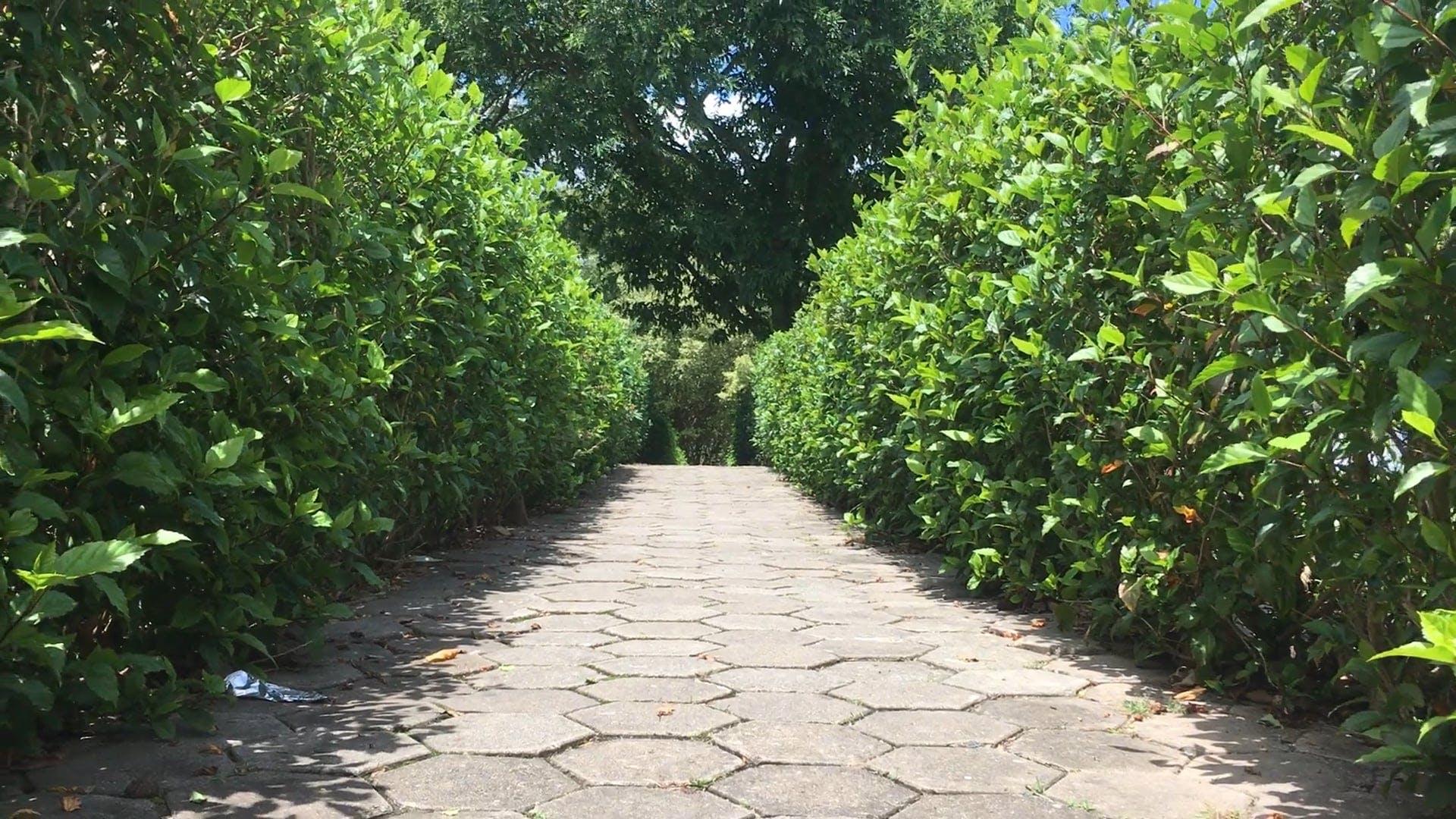 Path In Between Plants
