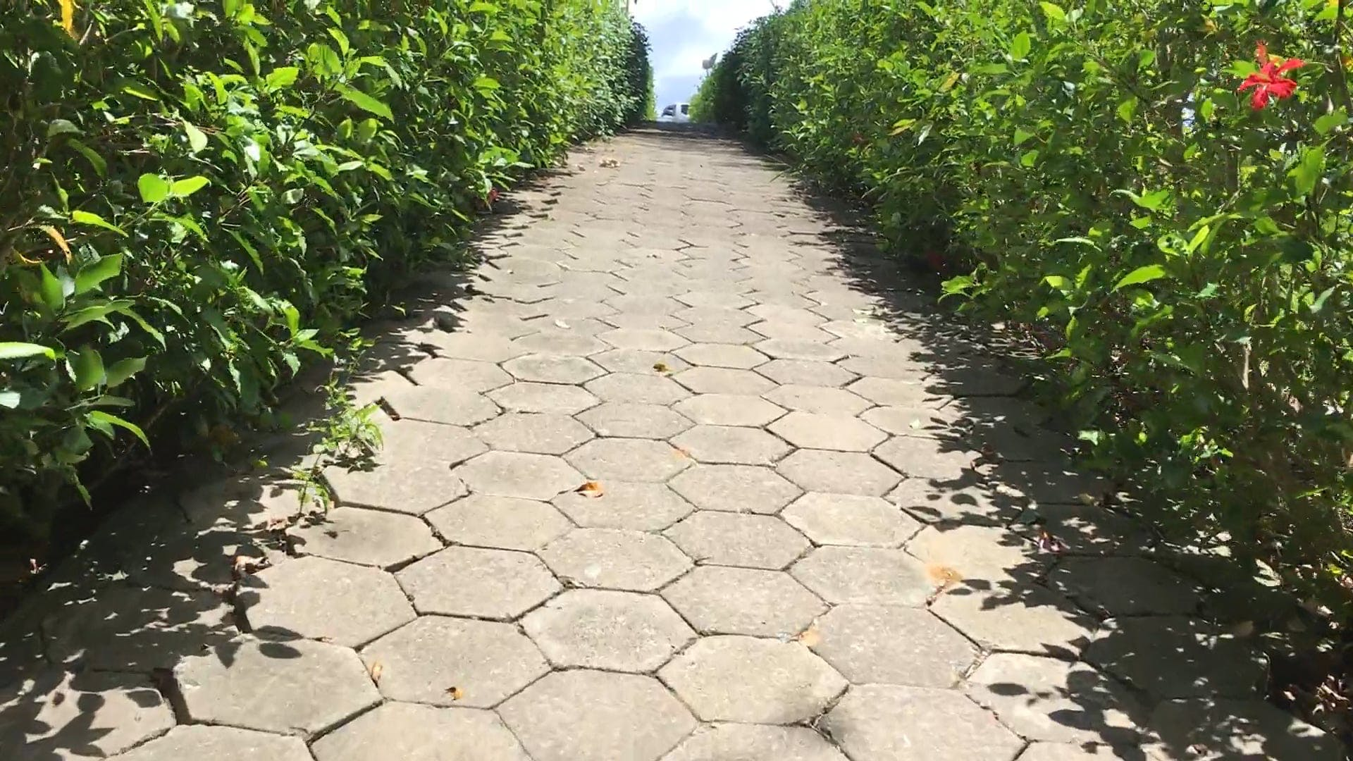 Paved Pathway With Plants On The Side