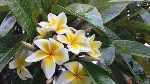 Video Of Flowers After The Rain
