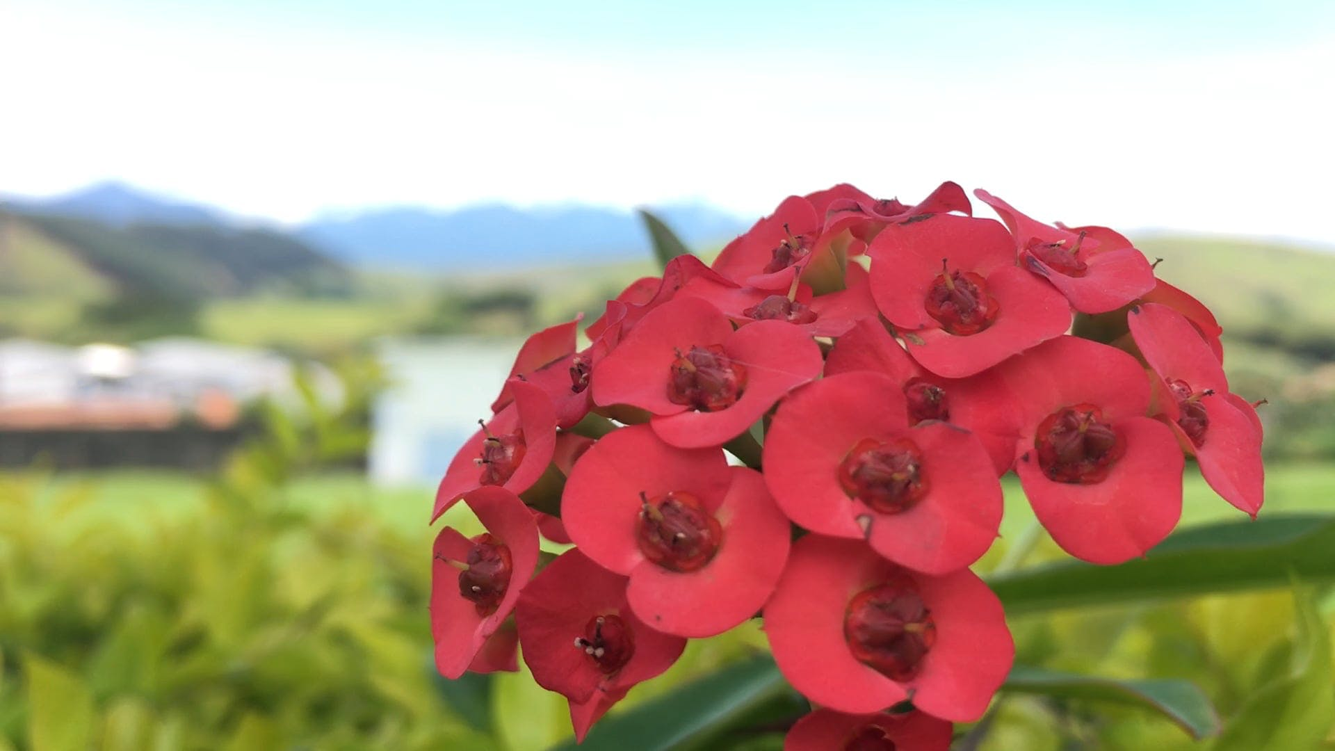 Bunch Of Red Flowers