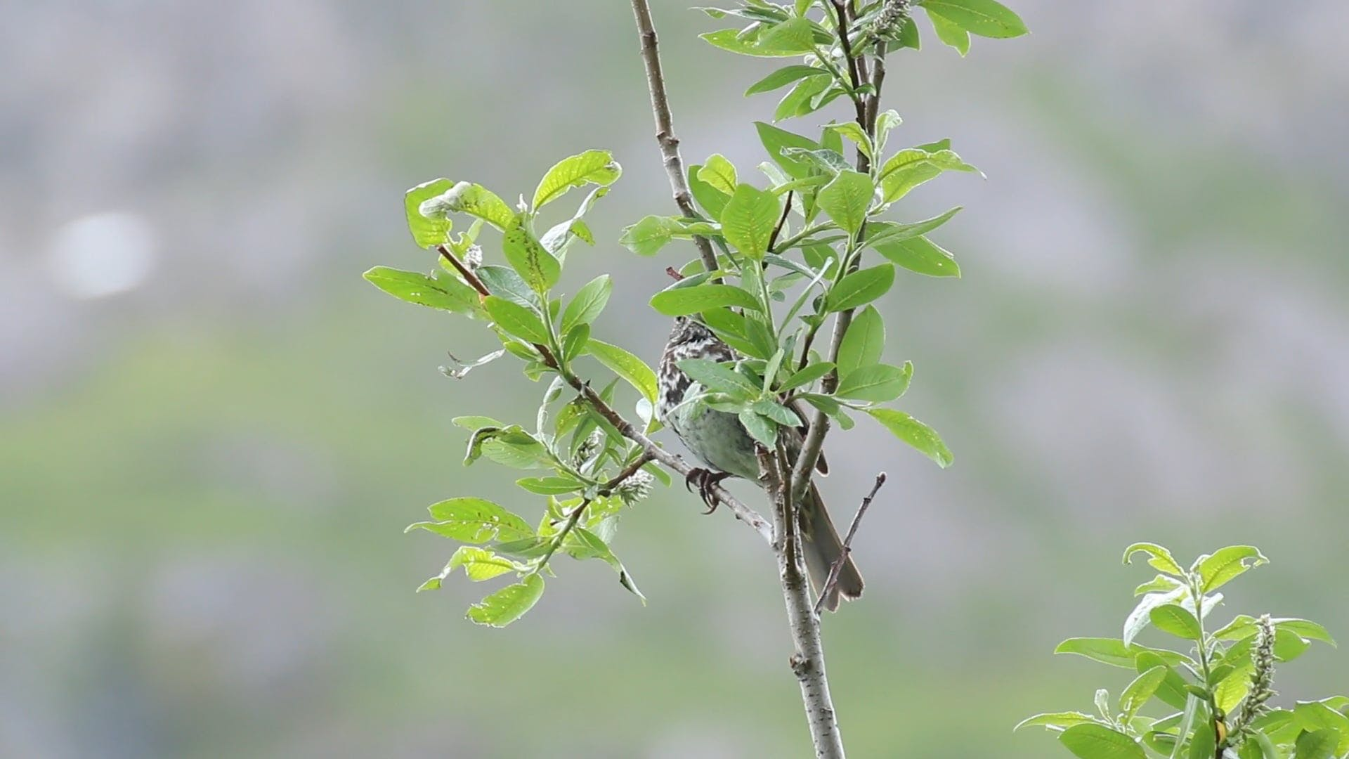 Close View Of A Bird In A Tree