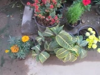 Variety Of Potted Plants