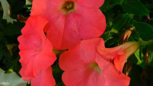 Beautiful Blooming Bell Flowers