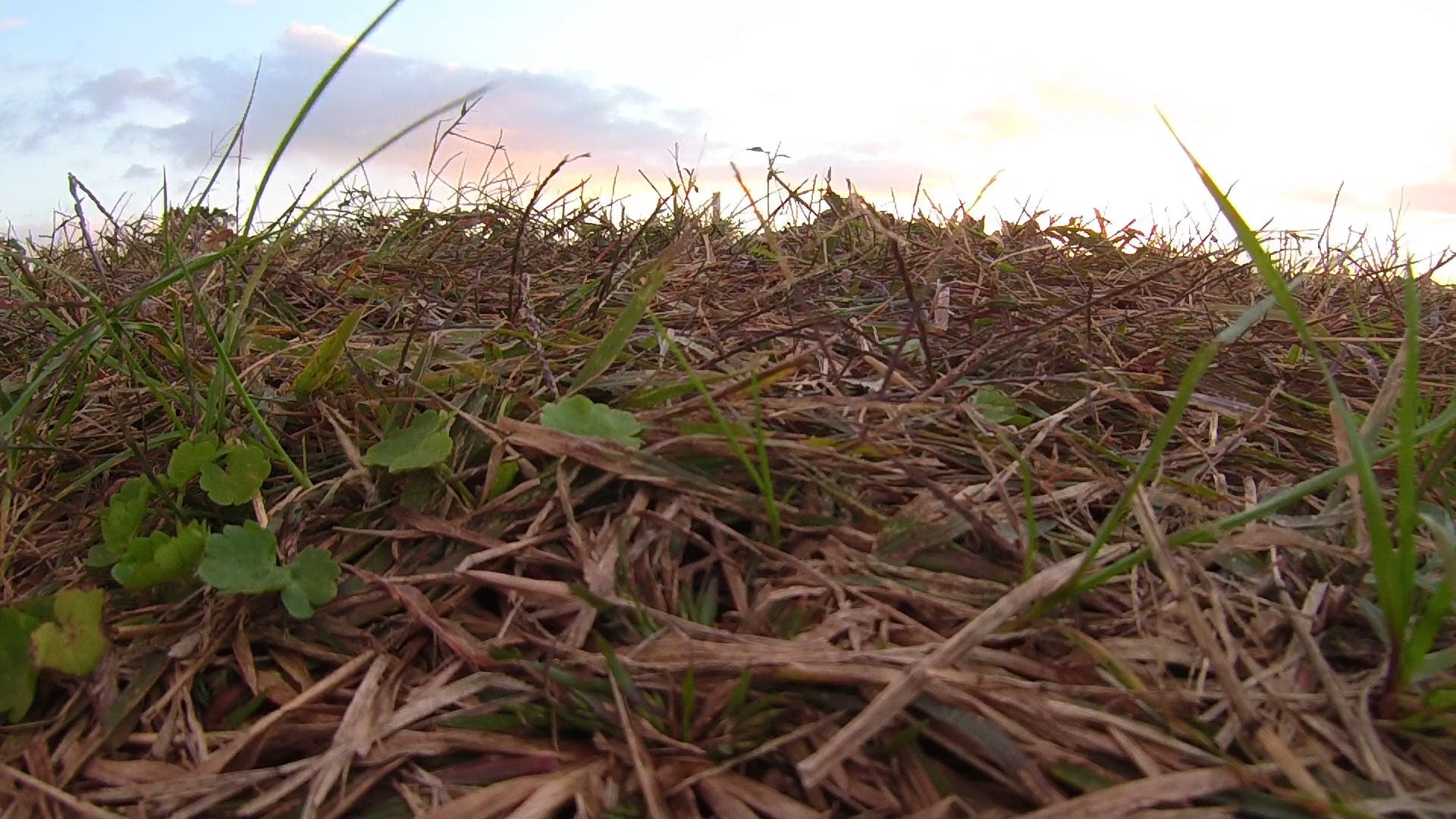 Footage Of A Vast Farmland