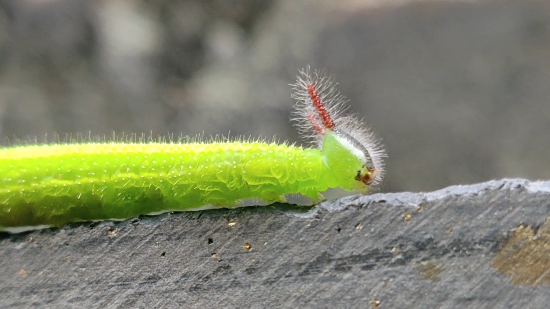 Close-Up Of A Green Worm