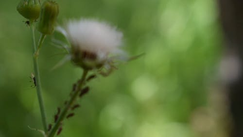 Close View Of A Dandelion Flower
