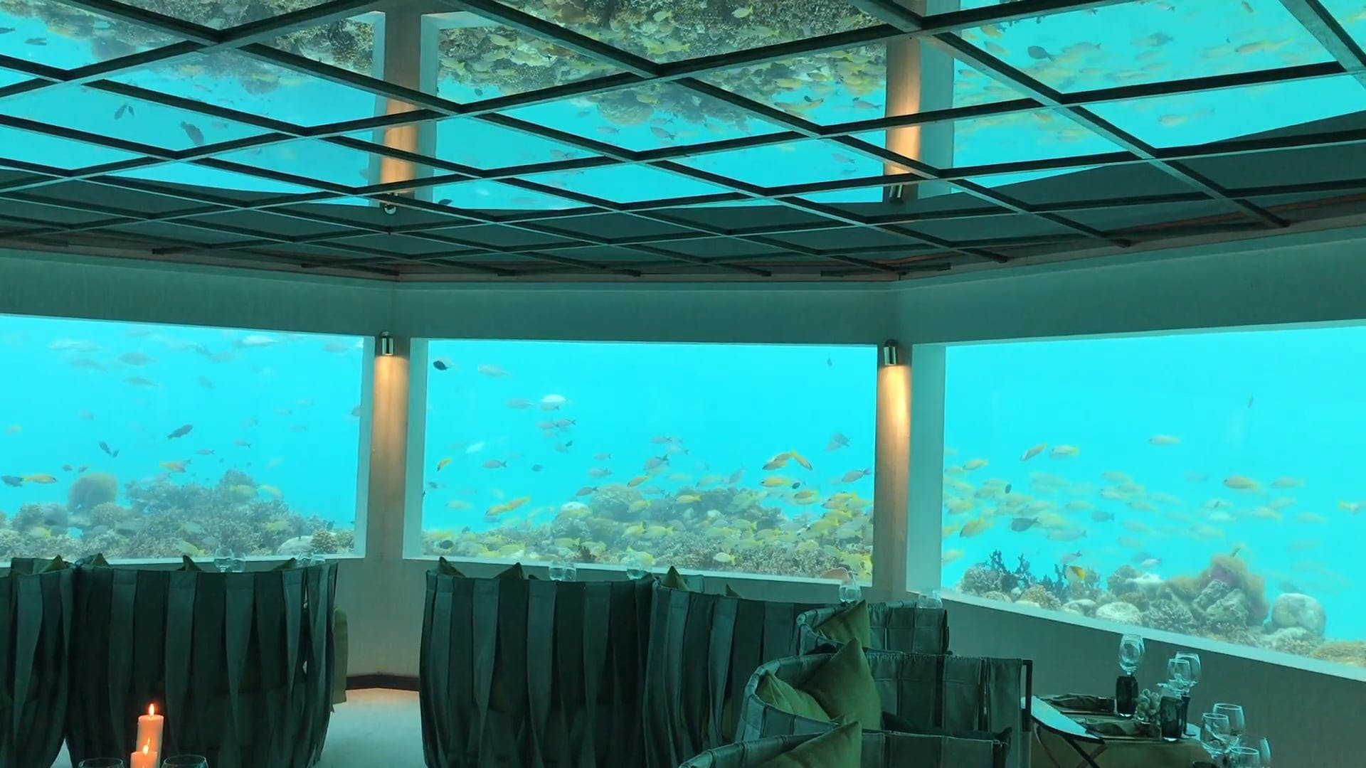 A Beautiful Aquarium With Various Fishes