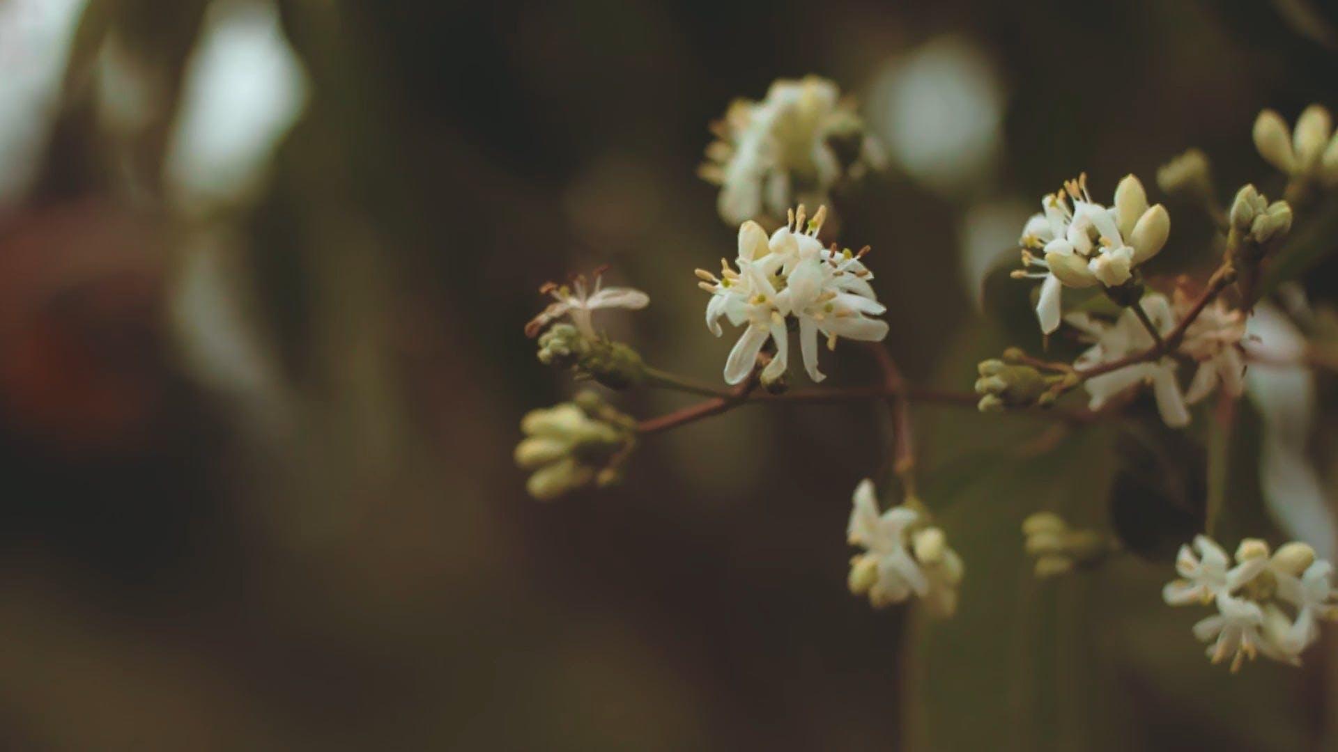 Macro Shot Of Flora