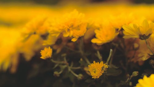 Close-Up Video of Yellow Flowers