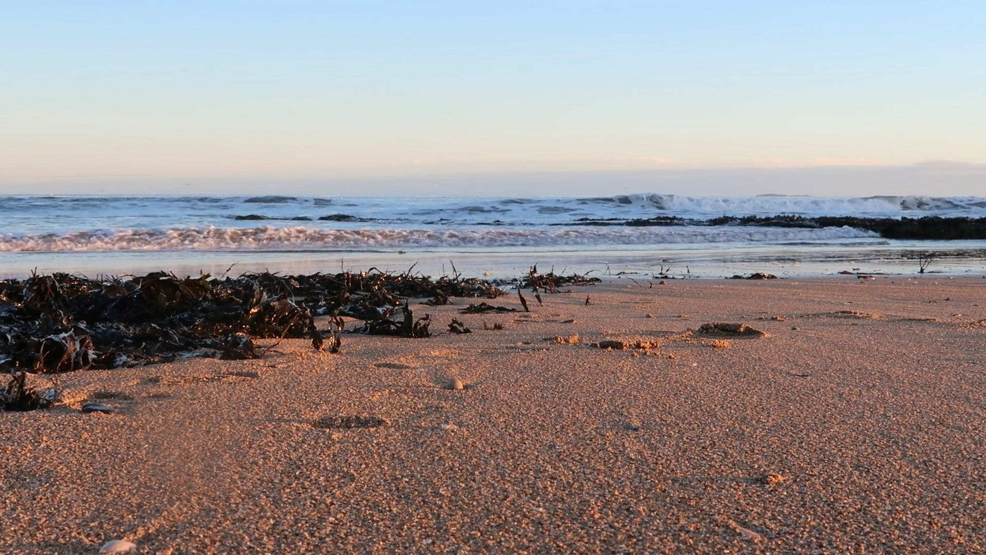 View Of Sea With Seaweeds On Shore