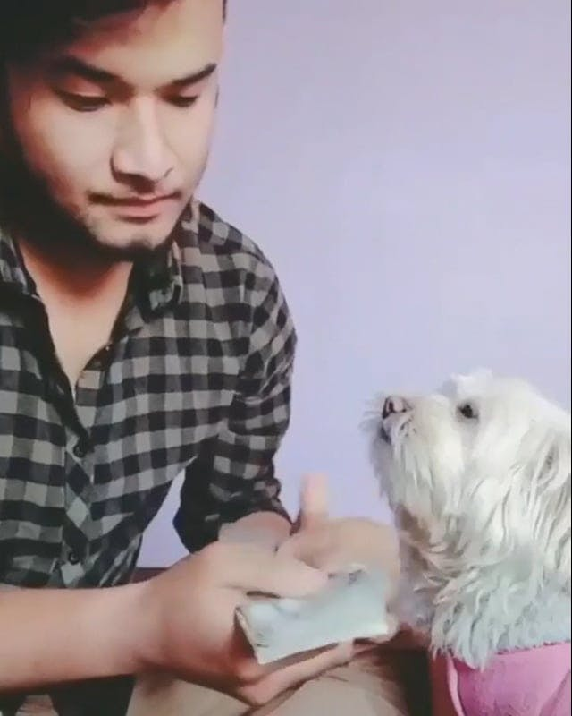 Funny Video Of A Man And His Dog