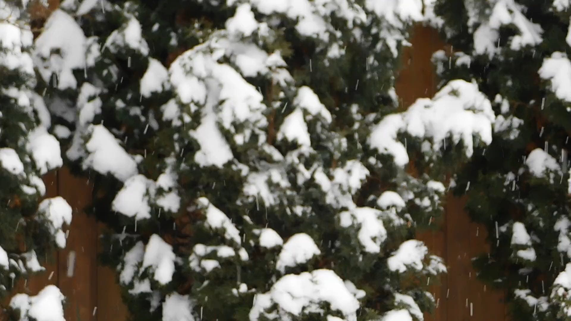 Snowcapped Tree