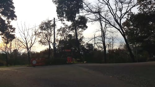 Trees Being Cut Down
