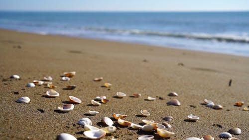 Conchas De Mar En La Arena