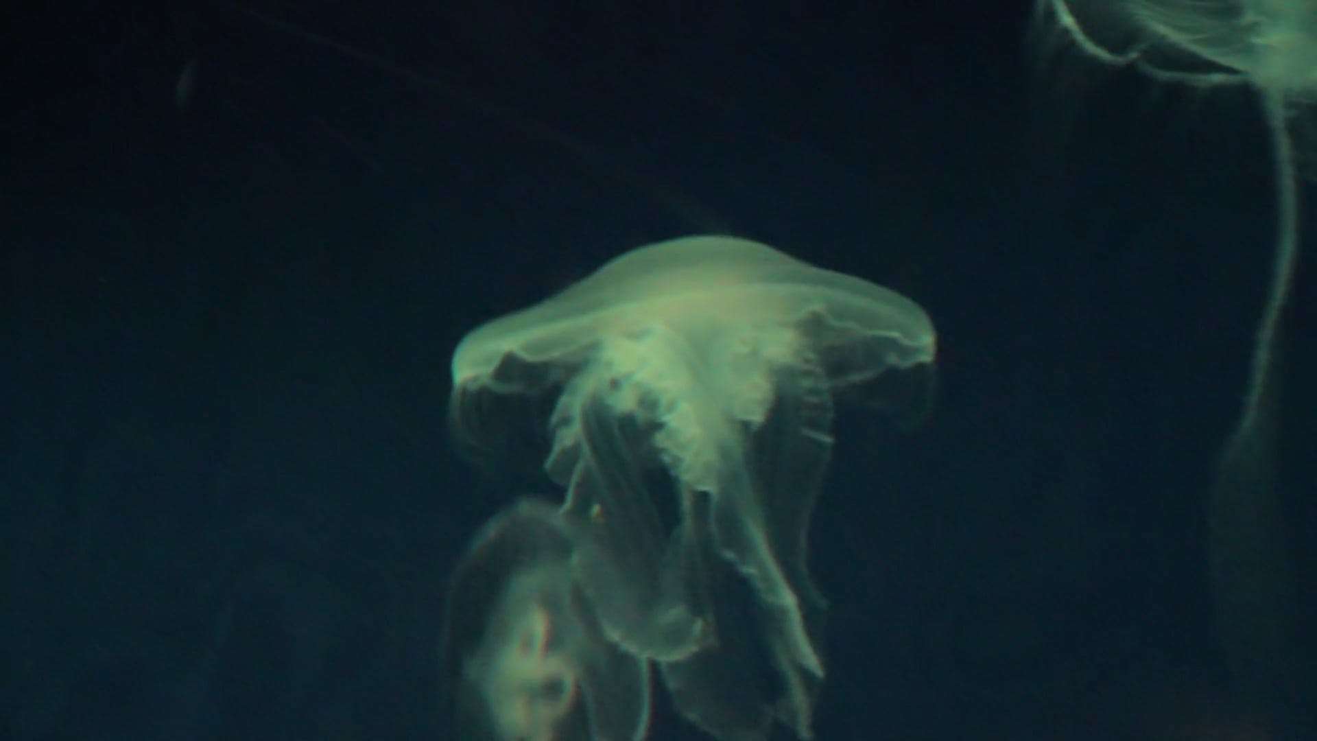 A Jellyfish Underwater With Changing Background Colors