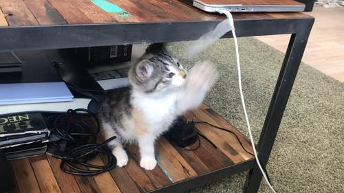 A Playful Cute Kitten