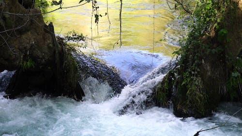 Flowing Water Between Trees