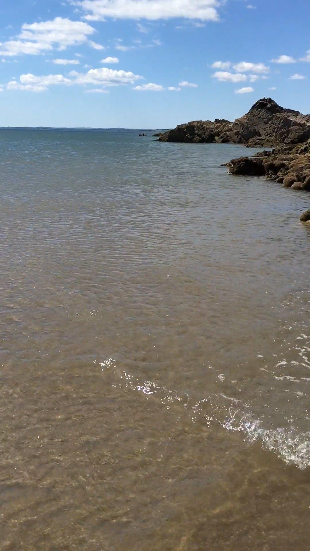 Clams On Rocks Along The Sea