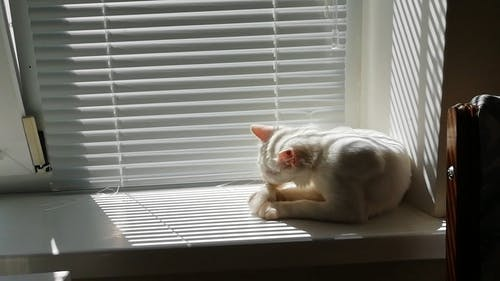 Cat Cleaning Itself By The Window