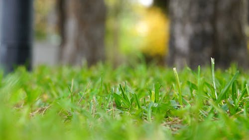 Selective Focus Video Of Grass On A Windy Day