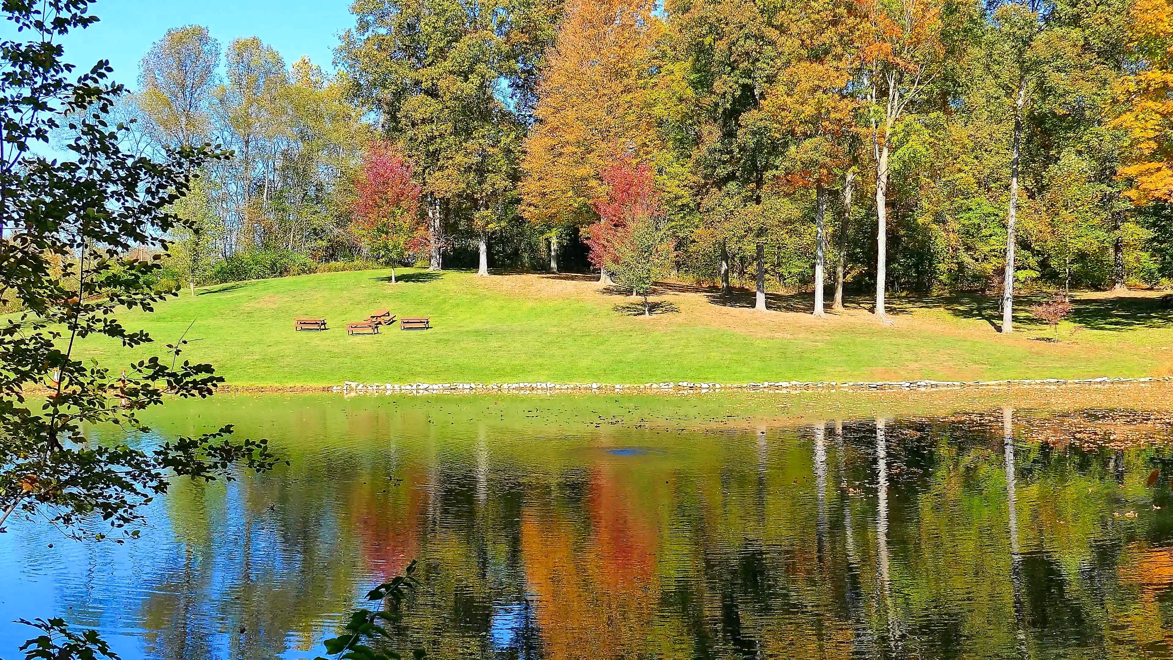 A Beautiful Park With Autumn Trees