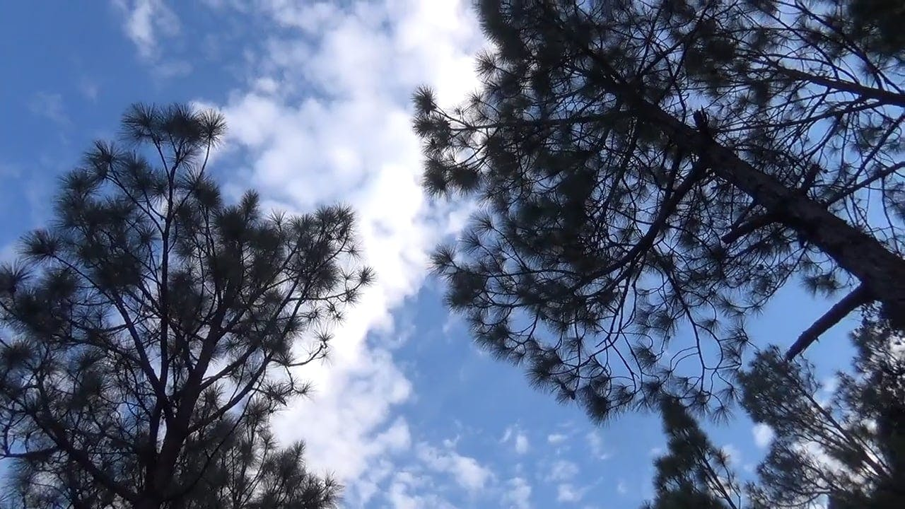 Low Angle Shot of Tall Trees