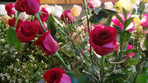 Variety Of Fresh Roses
