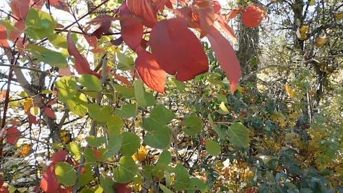 Video Of Leaves