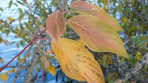 Close-up View At The Yellow Leaves