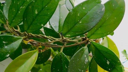 Leafy Houseplant
