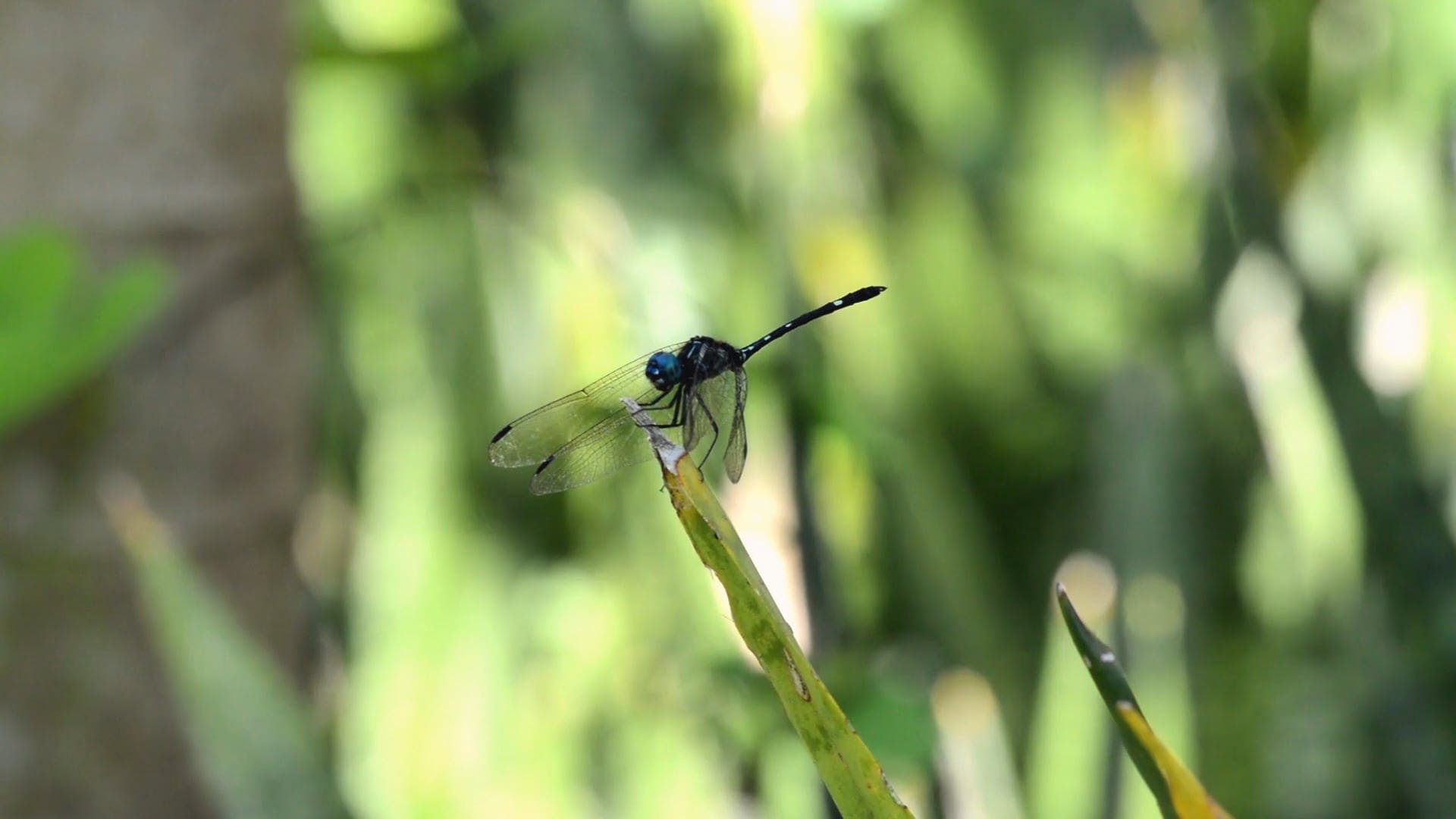 Close View Of A Dragonfly On A Leaf