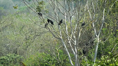 Vultures Perched On Tree Branches